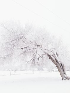 Winter Photography .