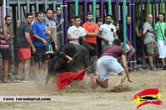 torodigital: XIV Concurso de ganaderías con la participación d...