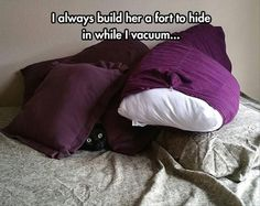 When the #cat demands a pillow fort...