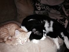 Update: Bruno and Orbit   I am happy to report that Bruno and Seamus (formerly Orbit) are doing very well. They get along, for the most part, and seem right at home here. They are both wonderful cats, and they are very happy.   Thanks so much for all you do!  Best regards,  Sue and Dave