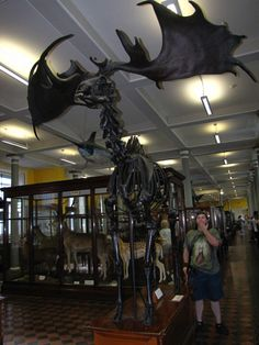 """A reminder that Thranduil's mount used to actually exist. Irish Elk """"The Irish elk (Megaloceros giganteus)[1][2] is an extinct species of deer in the genus Megaloceros and is one of the largest deer that ever lived. Its range extended across Eurasia, from Ireland to northern Asia and Africa. A related form is recorded from China during the Late Pleistocene.[3] The most recent remains of the species have been carbon dated to about 7,700 years ago in Siberia.[4] […] The Irish Elk stood about…"""