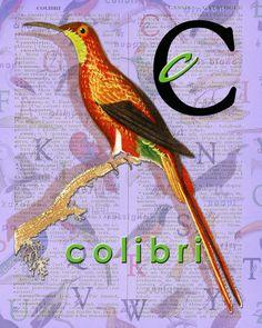 C for COLIBRI.Hummingbird Decor art birds ABC par BerniesArtPrints