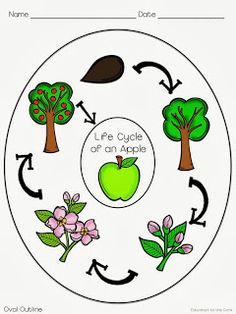 Education to the Core: Apple Life Cycle Graphic Organizer Freebie! Generate background knowledge or organize information from the text with this easy graphic organizer offered with and without pictures! Apple Activities, Sequencing Activities, Science Activities, Apple Life Cycle, Apple Unit, Apple Theme, Plant Science, Science Notebooks, Kindergarten Fun
