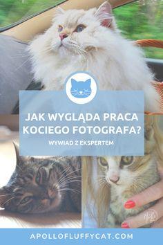 Jak się przygotować do kociej sesji zdjęciowej? O kociej fotografii i sesjach zdjęciowych z kłaczkiem rozmawiałam z kocią fotografką Moniką Knapik. Cats, Animals, Fotografia, Gatos, Animales, Animaux, Animal, Cat, Animais