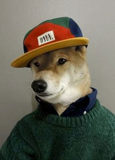 His taste in fashion is fairly woof