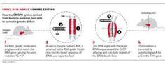 Correcting genetic code graphic