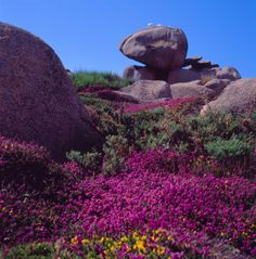 The colors of Brittany France --- photo by Andreina Schoeberlein via flickr