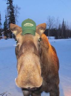 In my head, this moose sounds like Rick Moranis.