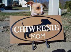 I don't know where I'd put this, but I want it! I love my little chiweenie.