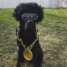 dog halloween costume rapper mix tape money chain cute puppy - Halloween Costumes For Labradors