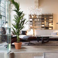 Heracleum by Bertjan Pot via Moooi   www.moooi.com   #lamp #suspension #suspended #moooi #interior #design