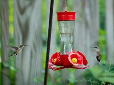 How to Attract Hummingbirds >> http://blog.diynetwork.com/maderemade/2014/09/02/get-ready-for-the-great-hummingbird-migration/?soc=pinterest