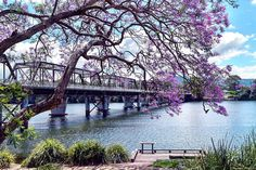 A Jacaranda tree over hanging the Shoalhaven River at Nowra NSW. See more landscapes @ www.chilby.com.au