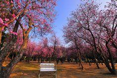 Tainan Park #Taiwan 台南公園