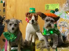 at Pupologie's Anniversay/StPat's Yappy hour w Missy. Wearing vest from BowWowWow. Hat from small AnnaLee character.attached with velcro and elastic. Hot glued  orange yarn stuff at rim of hat, for hair and shamrock w floral wire. And lite up shamrock necklace. sorry he's not wearing his 'ruff' links in pic