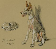 "Gorgeous1934 Matted Dog Print Ibiza Hound Puppy Orig Cecil Aldin c-1934 11x14"" Dog Lover Gift Pet Animal"