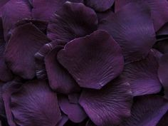 Eggplant Purple Silk Rose Petals