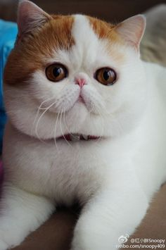 judging by the fur,this cat would be a dream to pet :) lol