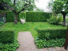 Appeltern boomgaard tuin Green Garden, Hedges, Stepping Stones, Outdoor Decor, Om, House, Stair Risers, Home, Living Fence