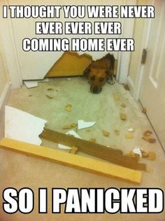 yep, this was my dog, karma. lol only difference was that she tore up the carpet and not the door. oh! and she also locked herself in that room. my husband had to kick the door in.