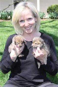 Baby Coyotes | Copyright Freed Enterprise, Inc. (Petiatric.com)