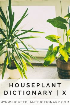 68 best houseplant dictionary images houseplants letter letters rh pinterest com