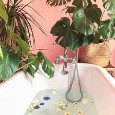 I had a spare hour to clean my total shit hole of a house, so I obviously used that time wisely and ran a bath filled with pretty flowers. . . . . . . . #urbanjungle #urbanjunglebloggers #houseplants #houseplantclub #plants #plantsmakepeoplehappy #ihavethisthingwithurbanjungles #plantsonpink #monstera #monsteradeliciosa #flowers #myhomevibe #myplantfam #interiors #interiors123 #interiorinspo #picoftheday #bohohome