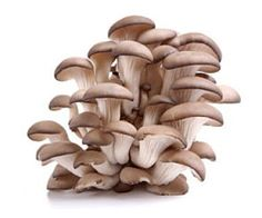 Health Benefits Of Oyster Mushroom; Maintain blood sugar, Immunity system, Cardiovascular conditions, Skin problems, Brain health