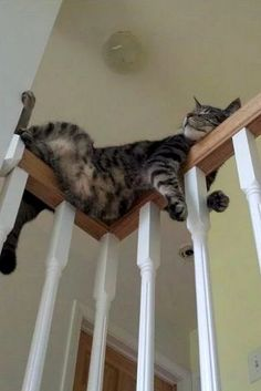 Cute Cats Chibi The Cute Cats And Kittens cat sleeping along corner of railing Cute Funny Animals, Funny Animal Pictures, Cute Baby Animals, Funny Cats, Farm Animals, Funny Images, Sleep Pictures, Funniest Animals, Nature Animals