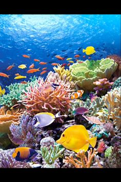 Beautiful coral reef scene to paint...