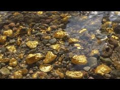 There's So Much Gold, That it's Impossible To Collect. Gold Mining Equipment, Aqua Farm, Objets Antiques, Gold Prospecting, Gold Money, Cool Rocks, Metal Detecting, Mineral Stone, Ancient Artifacts