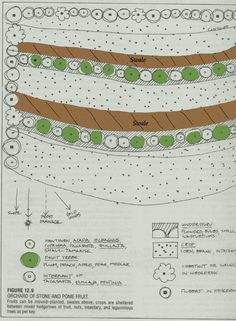 Swales as used in permaculture are designed to slow and capture runoff by spreading it horizontally across the landscape (along an elevation contour line), facilitating its infiltration into the soil.