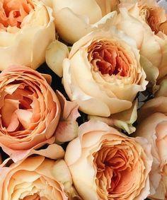 101 красная роза в Праге   Cool Flowers