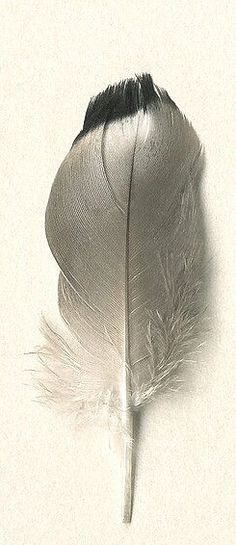 Gray | Grey | Gris | グレー | Grigio | серый | Gurē | Colour | Texture | Pattern | Style | Design | Feather...