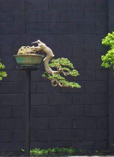 Bonsai Art, Terrariums, Gardening, Floral, Green, Inspiration, Design, Tatuajes, Plants