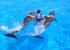 Hawaii <3 To swim with Dolphins
