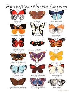 Butterflies of North America Print. $24.00, via Etsy.