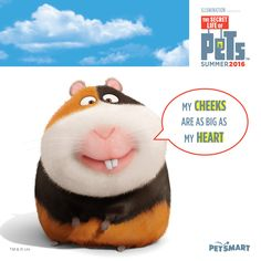 Meet Norman — small package, lots of love. #thesecretlifeofpets