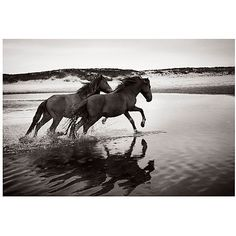 Soul Mates Photographs (4,015 CAD) ❤ liked on Polyvore featuring home, home decor, wall art, black and white home decor, horse home decor, black white home decor, black and white wall art and black white wall art
