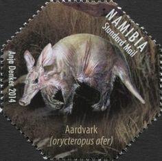 Aardvark (Orycteropus afer)