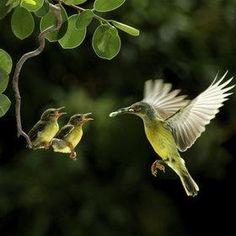 hummingbird feeding her young