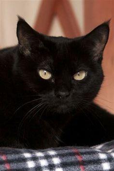 UTAH Adopt Darkstar at Best Friends Animal Sanctuary