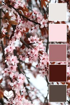 Blossom Color Palette - Flower Inspired Color Scheme Cherry blossoms in spring are a sight to behold! So beautiful.Cherry blossoms in spring are a sight to behold! So beautiful. Winter Tones Color Palette ideas from 1803 Blossom Images