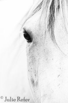 Horse Photography Black and White Horse Art Canvas by jrefer