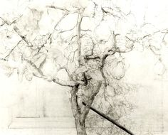 antonio lopez garcia drawing - extended measurement and lovely line variation Life Drawing, Painting & Drawing, Drawing Trees, Animal Drawings, Art Drawings, Spanish Painters, Landscape Drawings, High Art, Elementary Art
