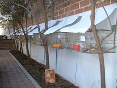 more rabbit cages