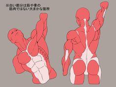28 tutorials on muscles! - pixiv Spotlight