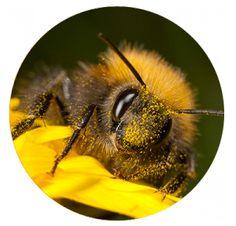Topraksız domates üretimi için bombus arılarından yardım alan firmamız sizlere organik sebze üretimi sağlamaktadır. http://www.semayakas.com/topraksiz-domates-uretimi/ #semayakas