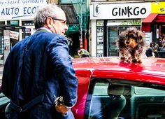 Dog waiting for owner on car roof in Paris.