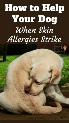 Understanding Dog Skin Allergies: Remedies, Treatment and Skin Care TipsYou can find Dog care tips and more on our website.Understanding Dog Skin Al. Dog Health Tips, Dog Health Care, Little Dogs, Dog Skin Allergies, Dogs With Allergies, Itchy Dog, Coconut Oil For Dogs, Training Your Dog, Training Collar